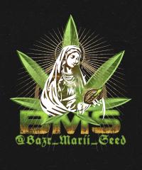 Bazr_Marii_Seed
